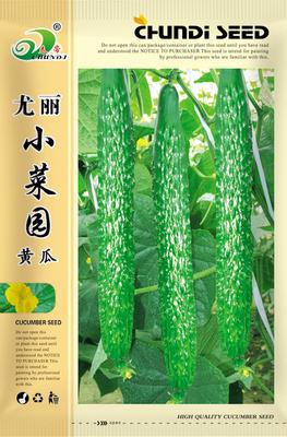 尤丽小菜园黄瓜