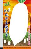 韩国九斤王萝卜